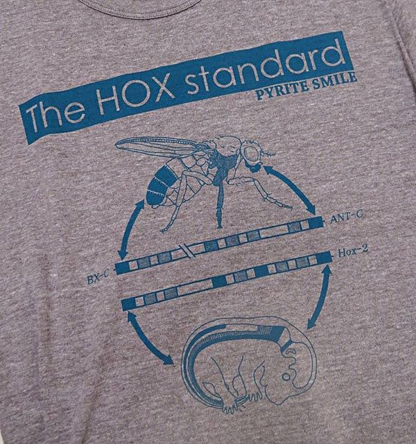 HOXT03_fix.jpg