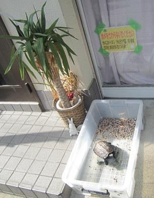 kamekichi20140529-1.jpg