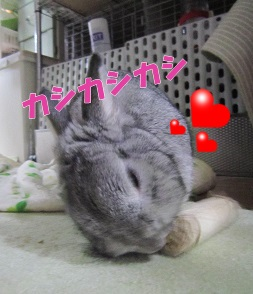 satoukibi03.jpg