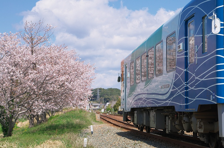 春を映して ~天浜線に桜咲く頃 2~