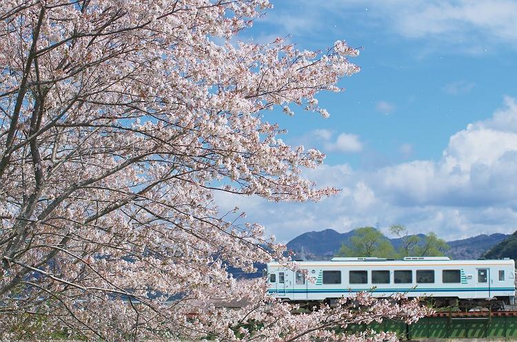 天浜線に桜咲く頃 5