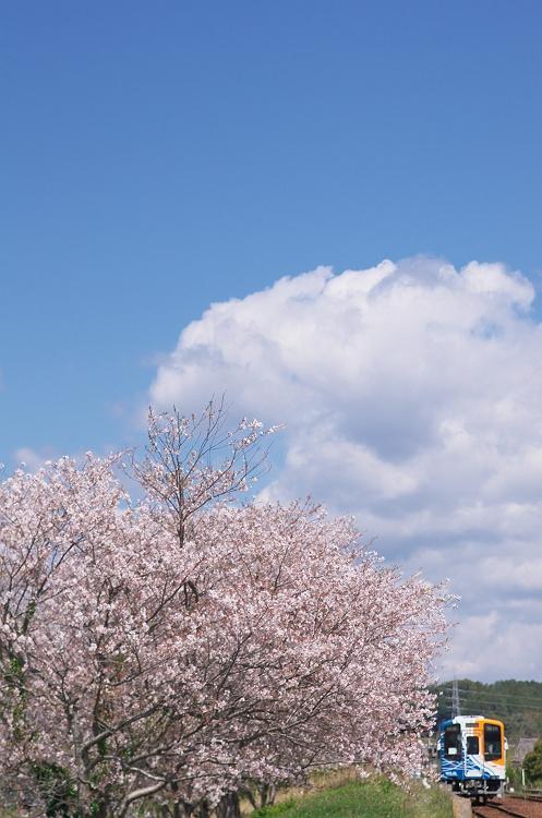 天浜線に桜咲く頃 6