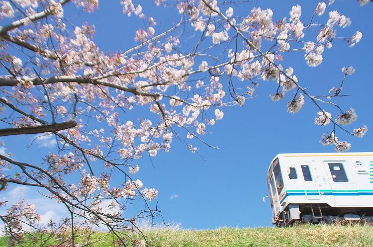 天浜線に桜咲く頃 7