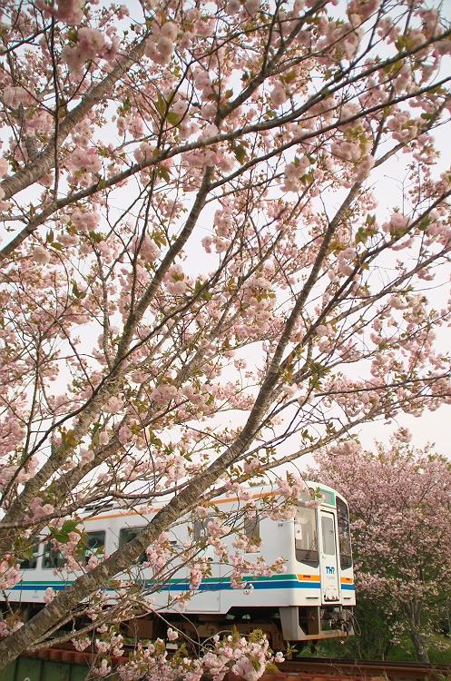 天浜線に桜咲く頃 8