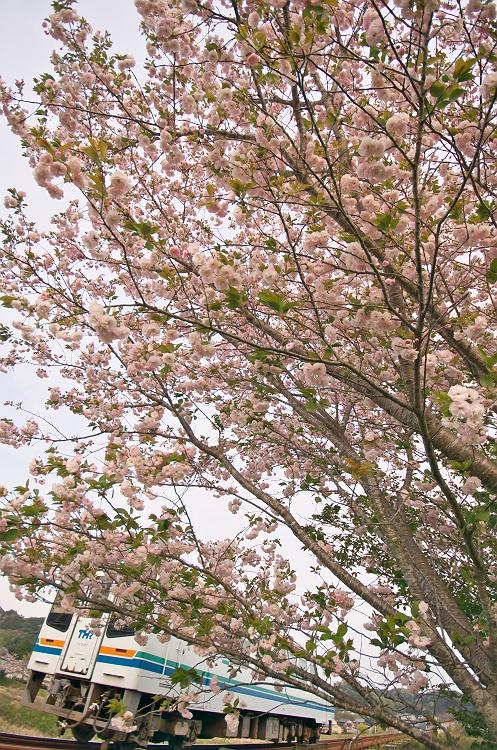 天浜線に桜咲く頃 9