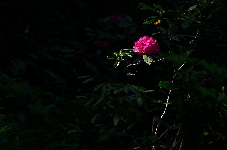 5月の小國神社