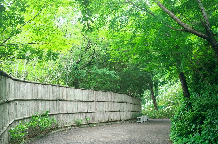 白百合の咲く森へ ~可睡ゆりの園 3~