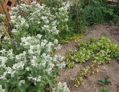 ミニ菜園1