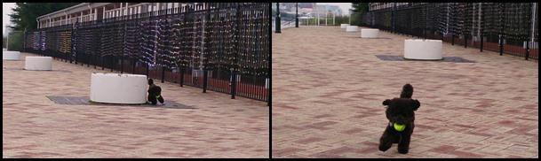 DSC_0031-tile.jpg
