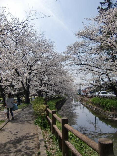 CIMG桜