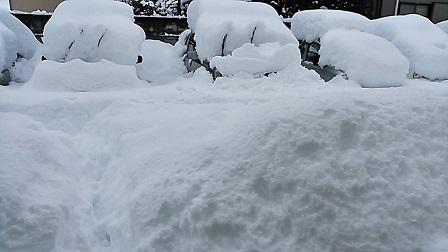 大雪2mini