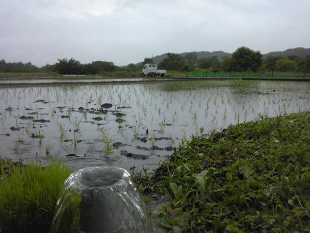 秋川沿いの田圃の様子