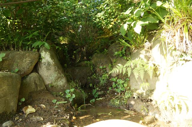高幡不動のお山から湧き出る、水