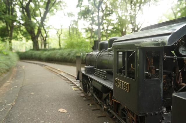 緑の中を走る C56 129