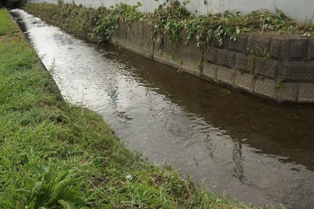 家の近くの田圃の用水路