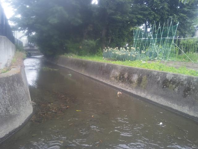 上田用水のよく魚が釣れる所も掃除