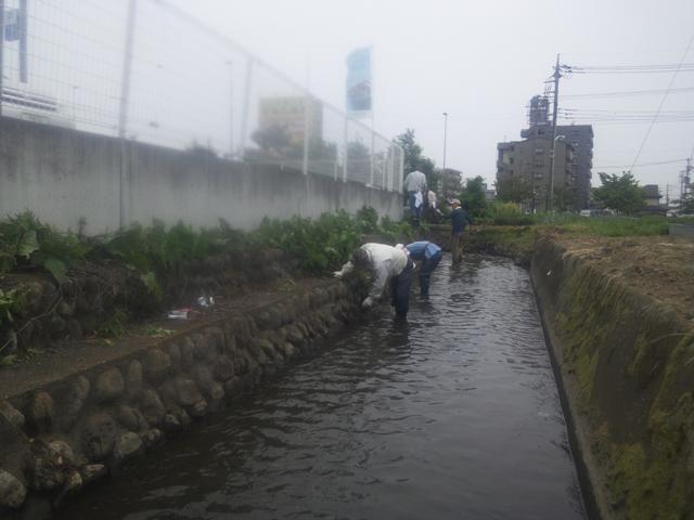 日野 上田用水の川草刈