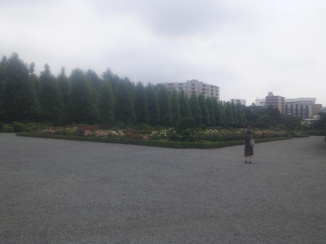 新宿御苑のフランス式の庭 バラ園