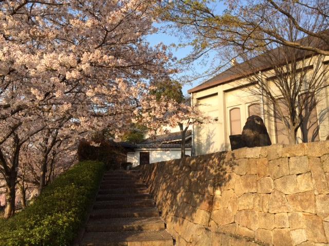 好古館桜2