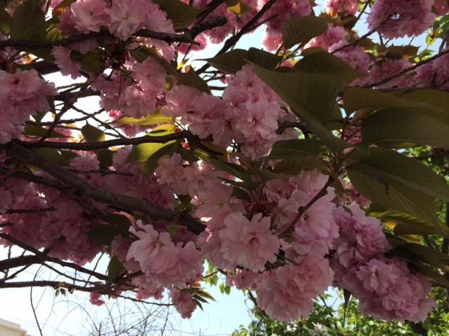 人丸花壇2