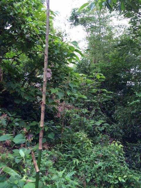 裏、竹の子2