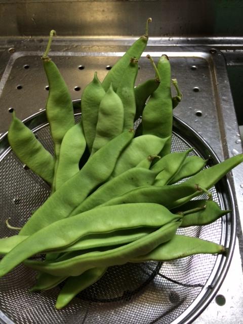 モロッコ豆2
