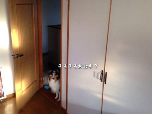 IMG_0498v.jpg