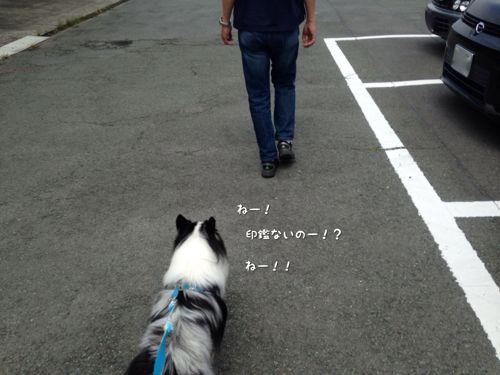 IMG_1083b.jpg