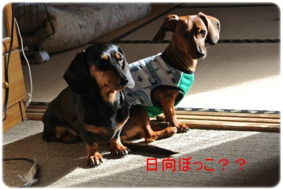 DSC_7223_01.jpg