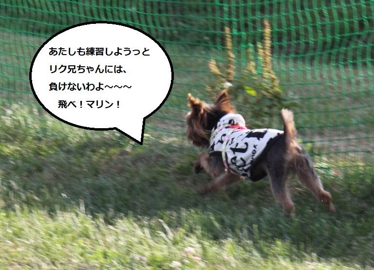 20140724-003.jpg