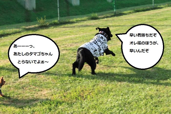 20140724-006.jpg