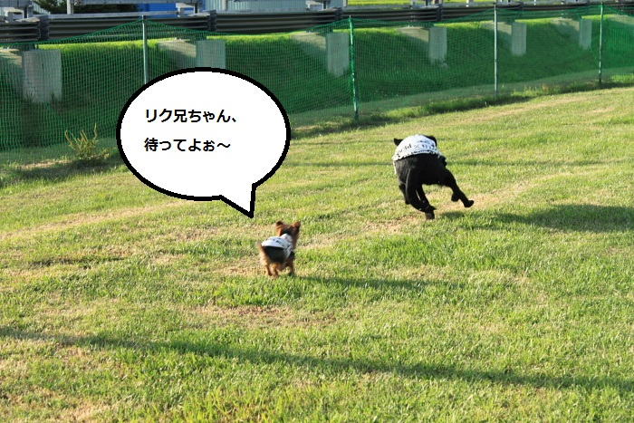 20140724-007.jpg