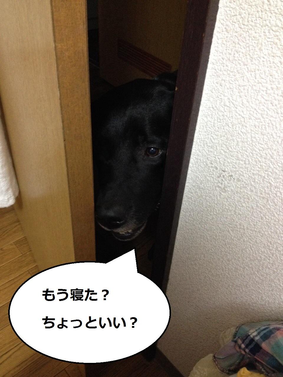 20140731-001.jpg