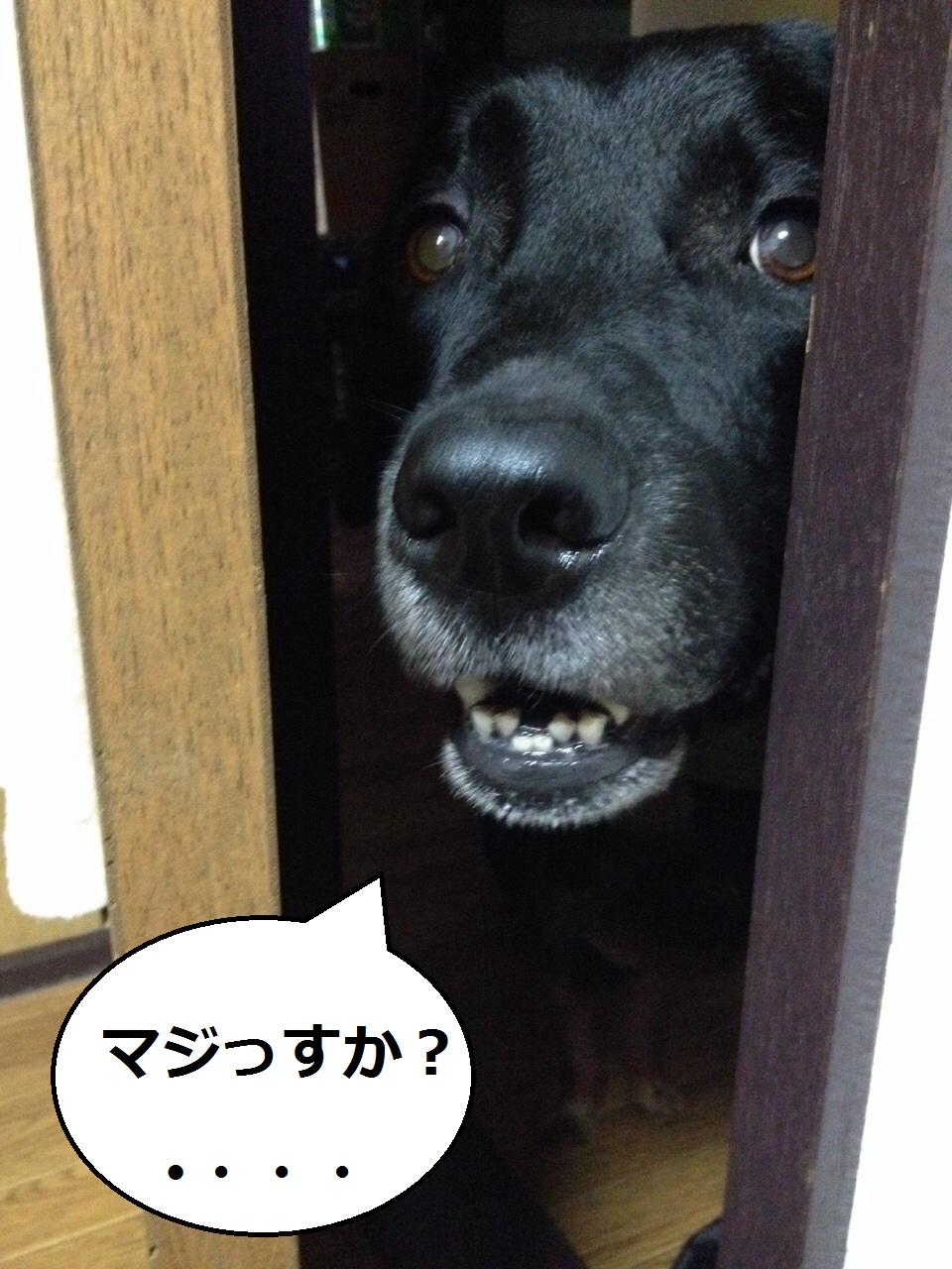 20140731-004.jpg