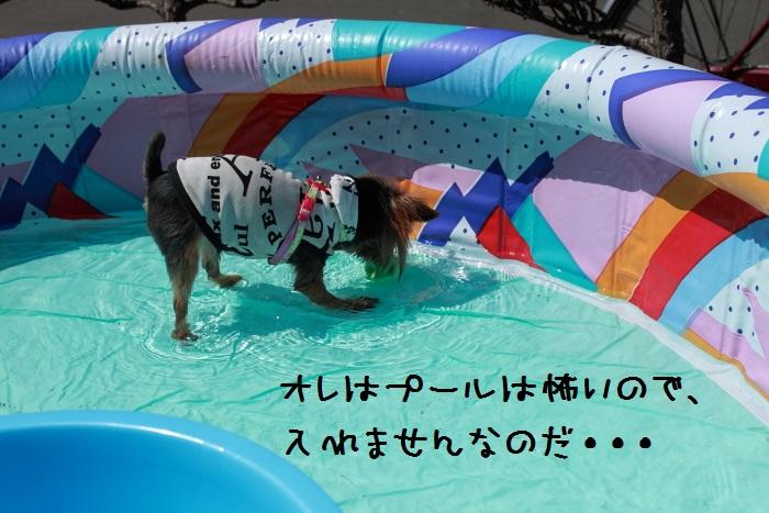 20140821-010.jpg