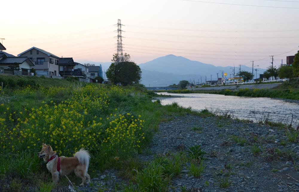 201405N_05421.jpg