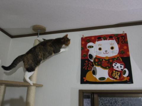 わかと招き猫