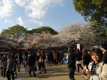 5上野公園開花状況