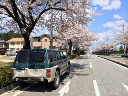 桜とDX1