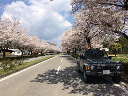 桜とDX2