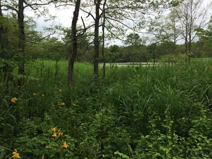7湿原の遊歩道