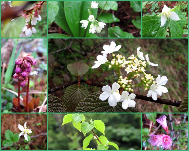 湯の丸高原の花々