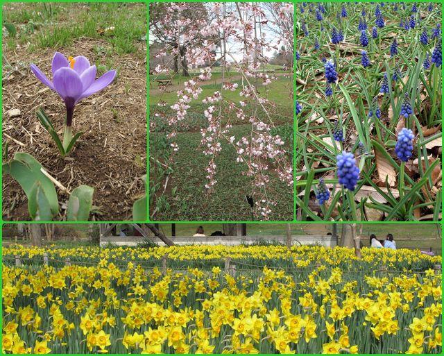 昭和記念公園の花々
