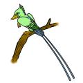 """""""孔子(古代中国の思想家)の鳥"""""""