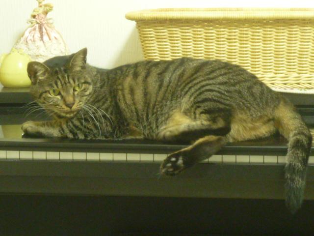 ピアノの上はベット