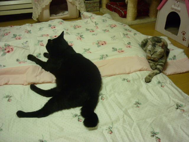 黒猫のニー1