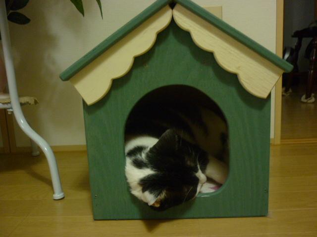 ぼく達の新しいお家