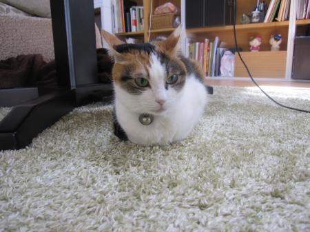猫の置物2