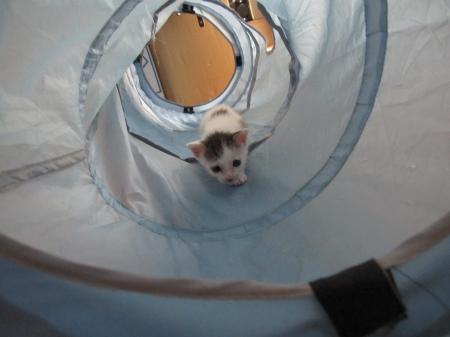 トンネル探検!