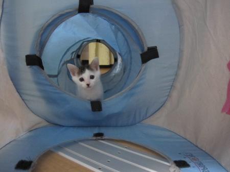 トンネル最高なっしー!